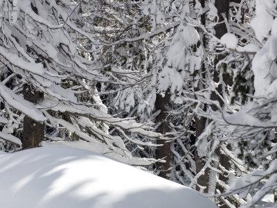 Snow at donner lake